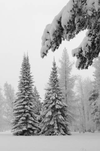 Картинки зима на телефон - красивые и прикольные скачать бесплатно 1