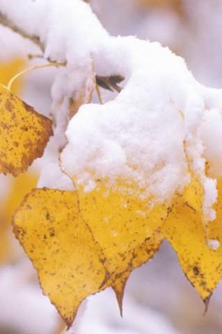 Картинки зима на телефон - красивые и прикольные скачать бесплатно 18