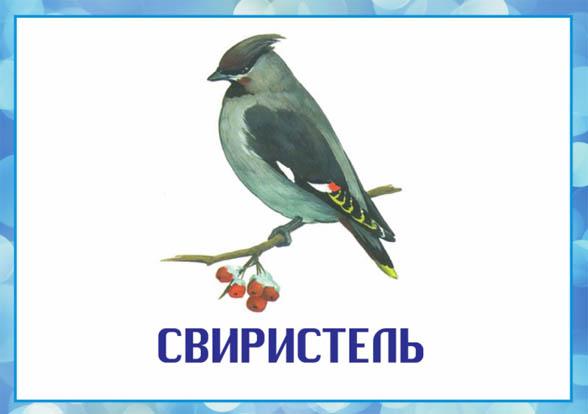 Картинки зимующие птицы - для детского сада красивые, прикольные 1