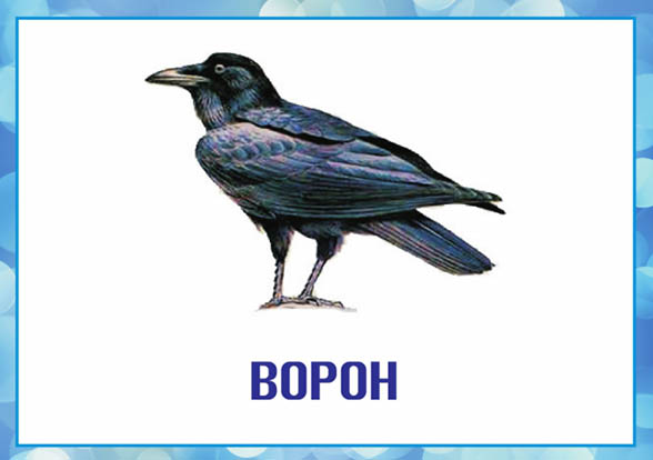 Картинки зимующие птицы - для детского сада красивые, прикольные 11