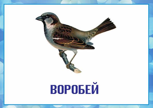 Картинки зимующие птицы - для детского сада красивые, прикольные 13