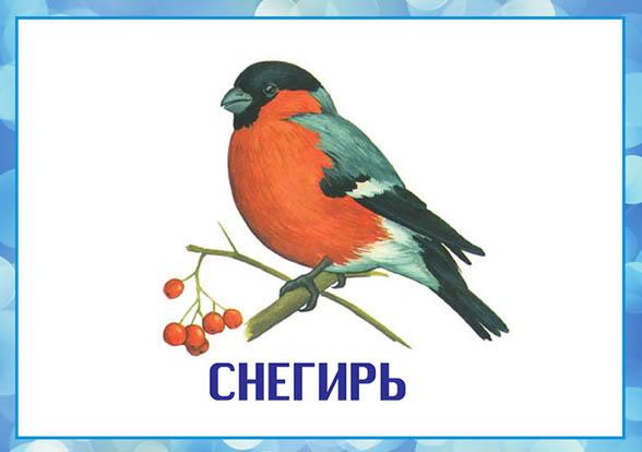 Картинки зимующие птицы - для детского сада красивые, прикольные 7