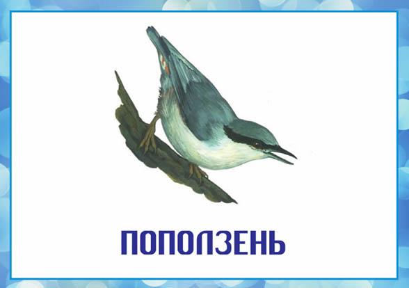Картинки зимующие птицы - для детского сада красивые, прикольные 8