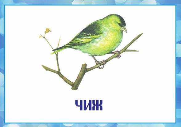Картинки зимующие птицы - для детского сада красивые, прикольные 9