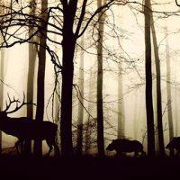 Картинки природы скачать бесплатно, красивые, прикольные 11