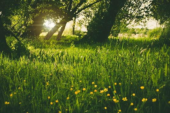 Картинки природы скачать бесплатно, красивые, прикольные 4