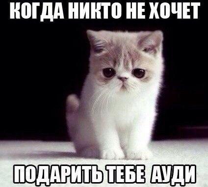 Кошки - смешные фото с надписями до слез, прикольные, ржачные 1