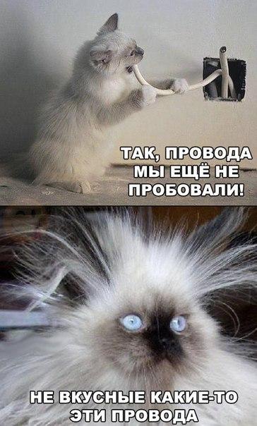 Кошки - смешные фото с надписями до слез, прикольные, ржачные 10
