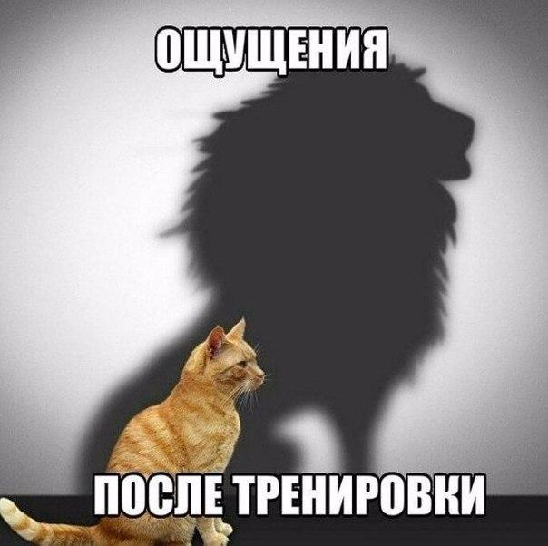Кошки - смешные фото с надписями до слез, прикольные, ржачные 15