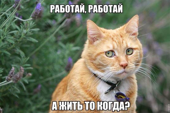 Кошки - смешные фото с надписями до слез, прикольные, ржачные 5