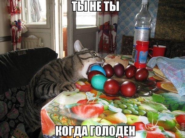 Кошки - смешные фото с надписями до слез, прикольные, ржачные 8