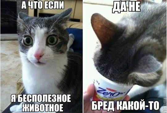 Кошки - смешные фото с надписями до слез, прикольные, ржачные 9