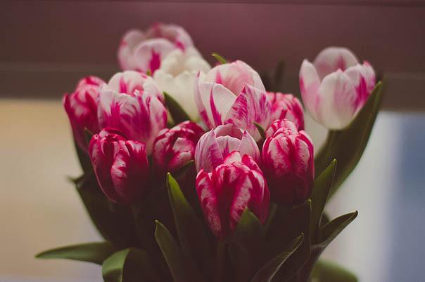 Красивые букеты из живых цветов - фото, картинки, удивительные 3