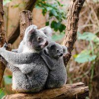 Красивые картинки природа, картинки природы фото и картинки 15