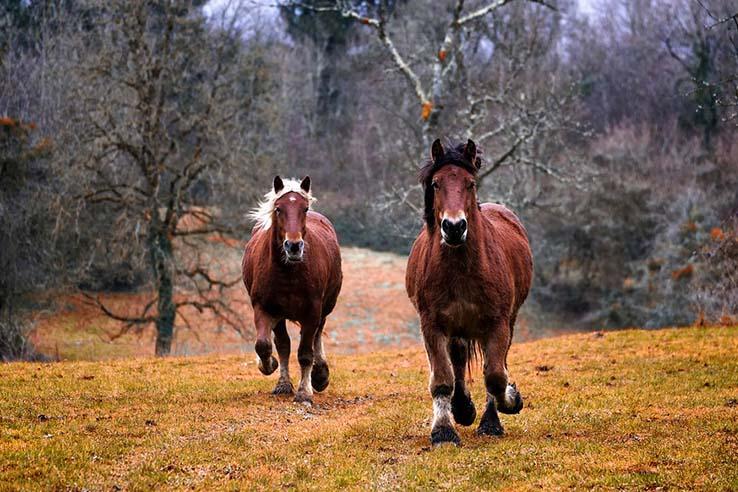 Красивые картинки природа, картинки природы фото и картинки 3