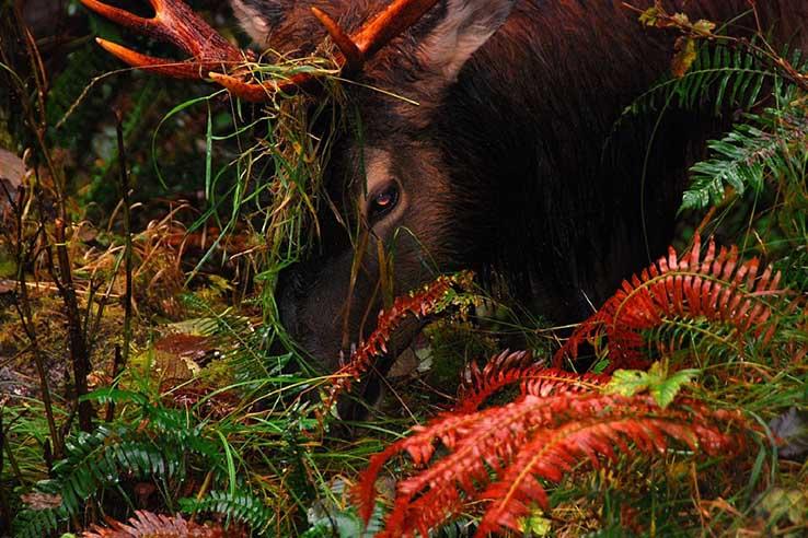 Красивые картинки природа, картинки природы фото и картинки 5