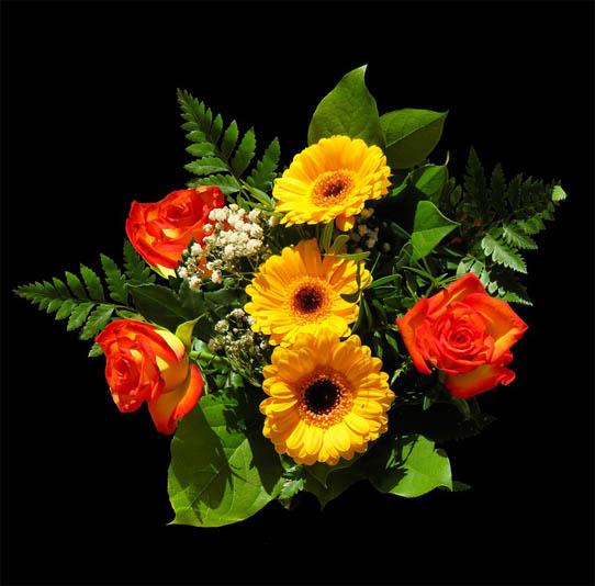 Красивые цветы фото и картинки - удивительные, прикольные 10