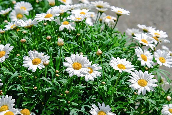 Красивые цветы фото и картинки - удивительные, прикольные 3