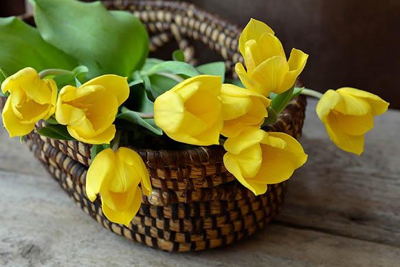 Красивые цветы фото и картинки - удивительные, прикольные 5