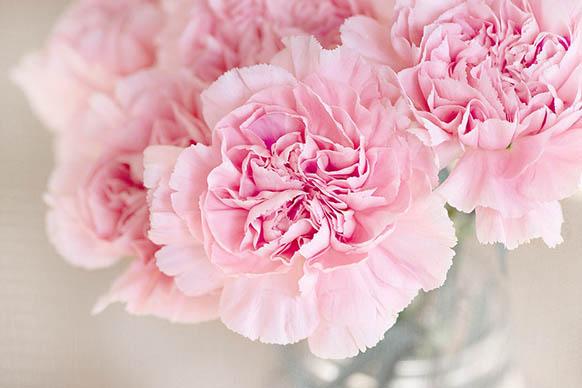 Красивые цветы фото и картинки - удивительные, прикольные 7