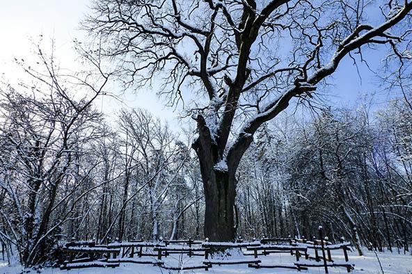 Очень красивые картинки зима природа, фото природы зимы - смотреть 11