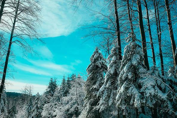 Очень красивые картинки зима природа, фото природы зимы - смотреть 7