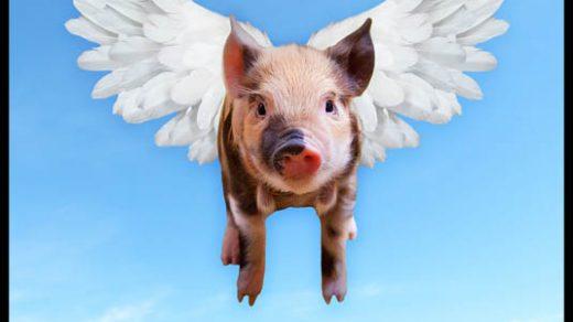 Почему мусульманам нельзя есть свинину - главные причины 1