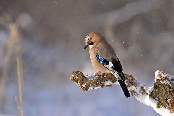 Природа зимы - картинки красивые, зимняя природа картинки 14
