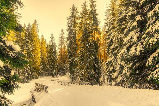 Природа зимы - картинки красивые, зимняя природа картинки 5