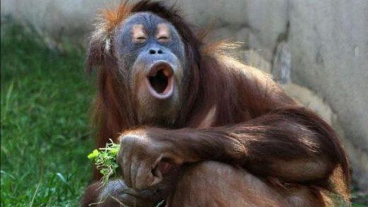 Ржачные и смешные фото про животных до слез - смотреть бесплатно 11