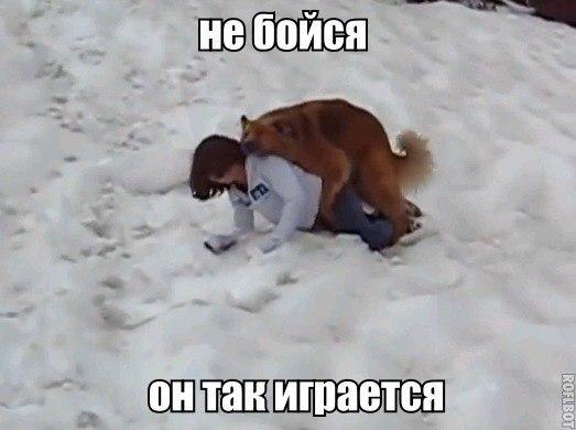 Ржачные и смешные фото про животных - смотреть бесплатно 11