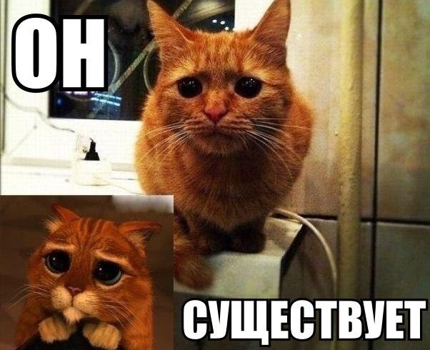 Ржачные и смешные фото про животных - смотреть бесплатно 2