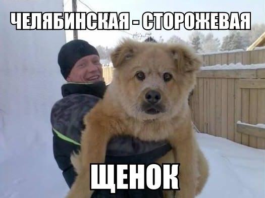 Ржачные и смешные фото про животных - смотреть бесплатно 4