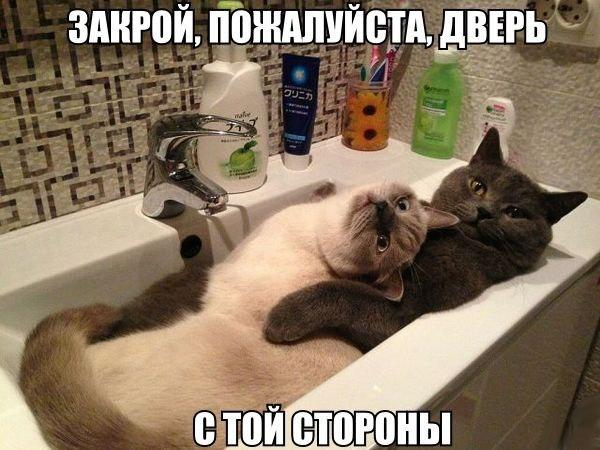 Ржачные и смешные фото про животных - смотреть бесплатно 5