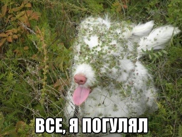 Ржачные и смешные фото про животных - смотреть бесплатно 6