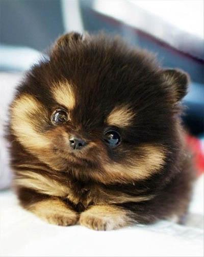 Самые милые животные в мире - фото, картинки, красивые, смешные 1