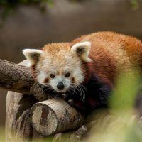 Самые милые животные в мире - фото, картинки, красивые, смешные 3