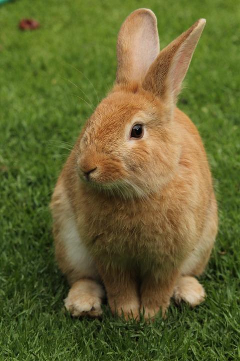 Самые милые животные в мире - фото, картинки, красивые, смешные 5
