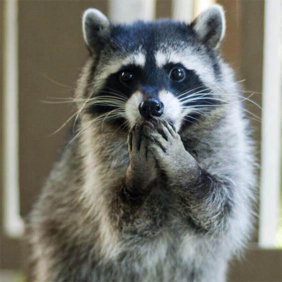 Самые милые животные в мире - фото, картинки, красивые, смешные 6