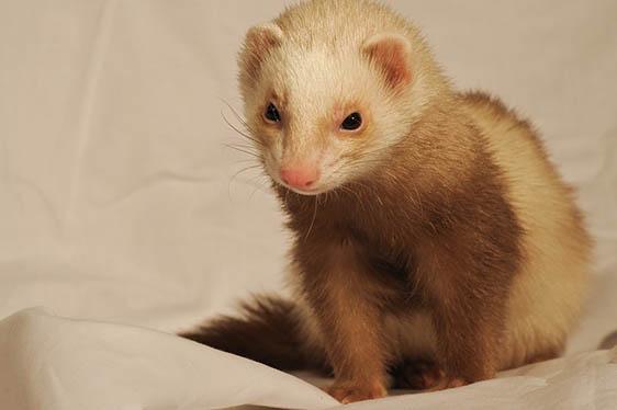 Самые милые животные в мире - фото, картинки, красивые, смешные 8