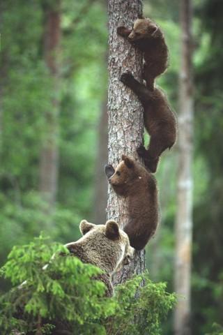 Скачать красивые картинки и фото на телефон - природа, пейзажи 13