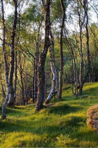Скачать красивые картинки и фото на телефон - природа, пейзажи 25