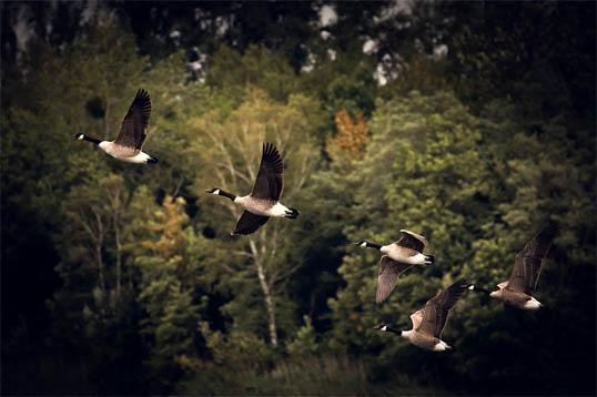 Скачать красивые картинки природы - удивительные, прикольные 10
