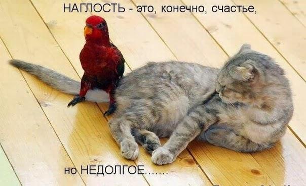 Смешные картинки с надписями про котов - прикольные, ржачные 1
