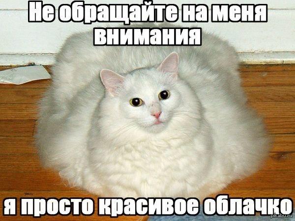Смешные картинки с надписями про котов - прикольные, ржачные 12