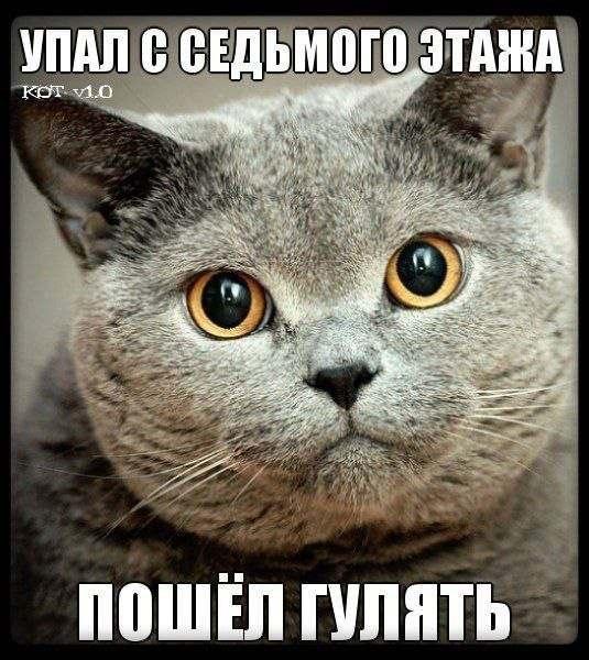 Смешные картинки с надписями про котов - прикольные, ржачные 13