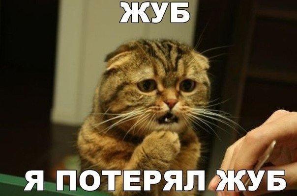 Смешные картинки с надписями про котов - прикольные, ржачные 14