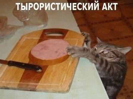 Смешные картинки с надписями про котов - прикольные, ржачные 16