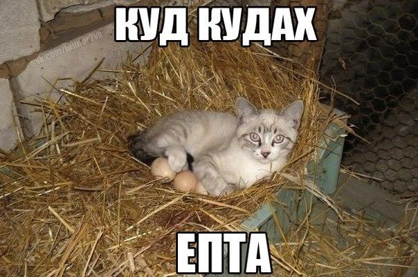 Смешные картинки с надписями про котов - прикольные, ржачные 5