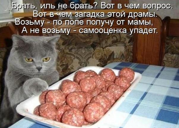 Смешные картинки с надписями про котов - прикольные, ржачные 6